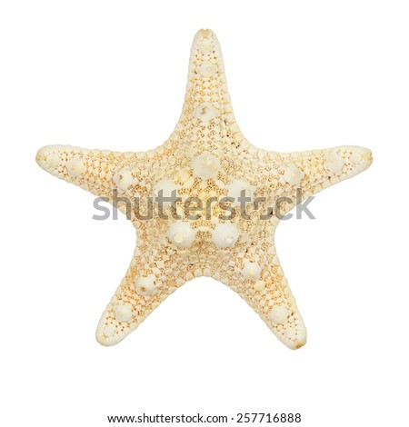 Starfish isolated on white background - stock photo