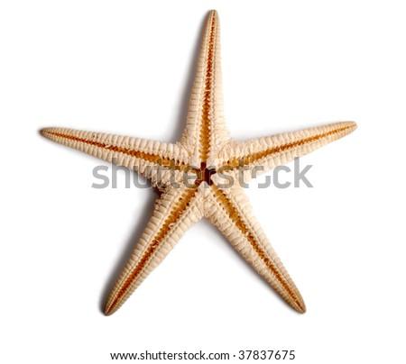 Starfish isolated on white background. - stock photo