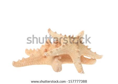 Starfish isolated on white background/Sea stars - stock photo