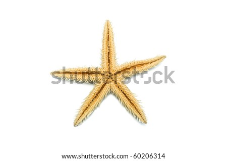 Starfish. It is isolated on a white background. - stock photo