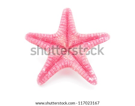 Starfish on a white background