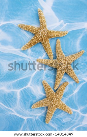 Starfish on blue background â?? a vacation background
