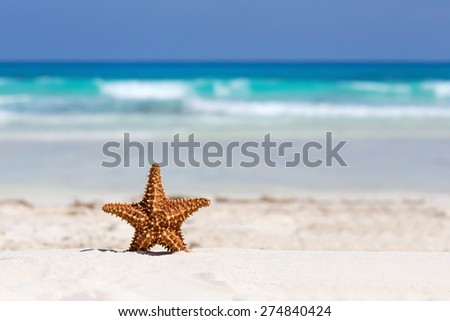 Starfish on caribbean sandy beach, travel concept
