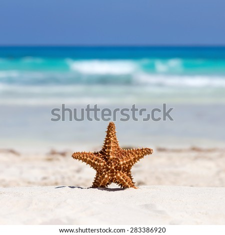 Starfish on caribbean sandy beach, travel concept - stock photo