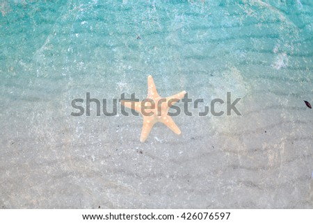 starfish on  rock at the beach sand