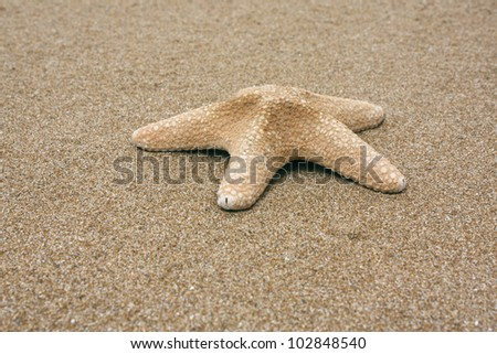 Starfish on Sand - stock photo