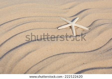 Starfish on sandy beach. Summer concept - stock photo