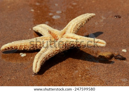 Starfish on the beach background over Black Sea - stock photo