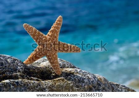 starfish on the beach in summer - stock photo