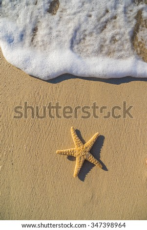 Starfish on the beach on a sunny day - stock photo