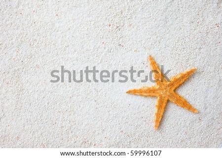 starfish on the beach, vacation memories. - stock photo