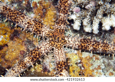 Starfish on the coral reef