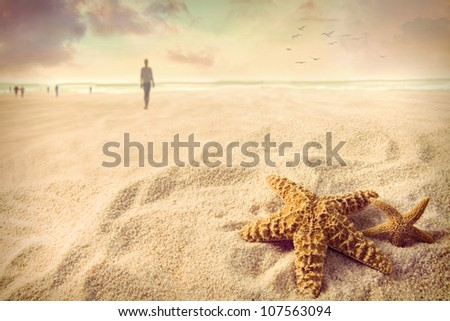 Starfish on the sand at the beach - stock photo
