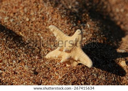 starfish on the shore of a sandy beach over Black Sea in Kerch, East Crimea, Russia - stock photo