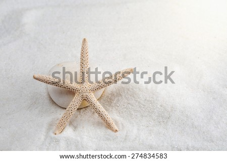starfish on the white sand - copy space