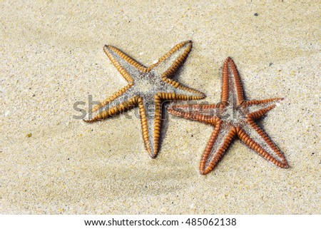 starfish or sea star on sand. Macro detail photography