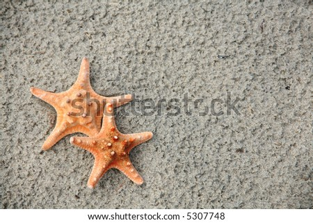 Starfish Pair: Two starfish on a sandy beach. Vacation concept with room for text.