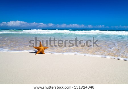 starfish with ocean , beach and seascape, - stock photo