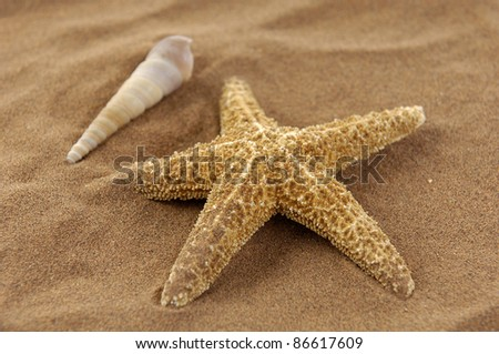 starfish with sea shells in the beach sand background - stock photo