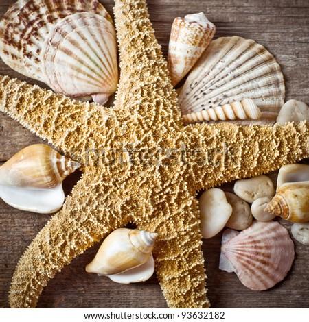 Starfish with seashell on wooden log - stock photo