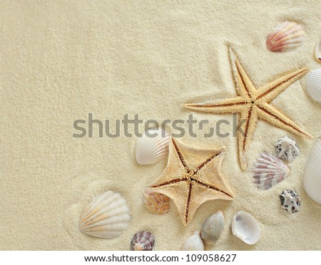 Starfish with shells on the Beach