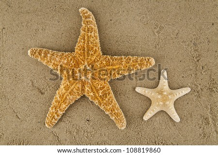 starfishes on sand - stock photo