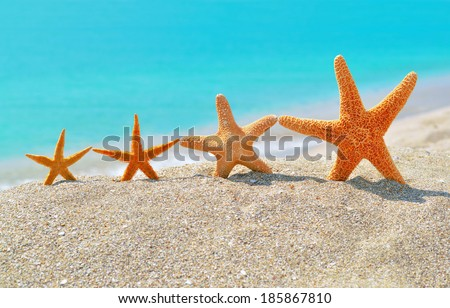 Starfishes on the beach against a turquoise sea - stock photo