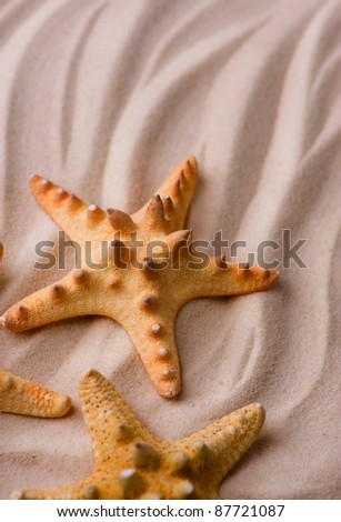 Starfishes on the Sand. Vacation concept