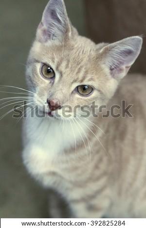 Staring Cat - stock photo
