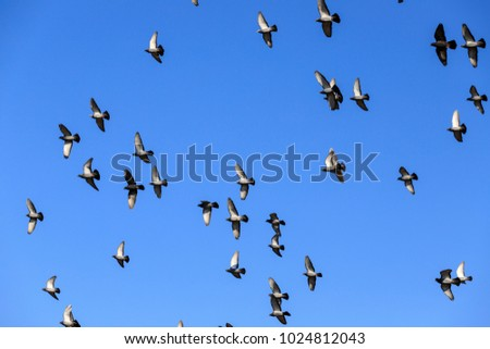 starling of birds in the blue sky