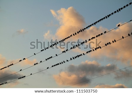 Starlings perched on a wire. - stock photo