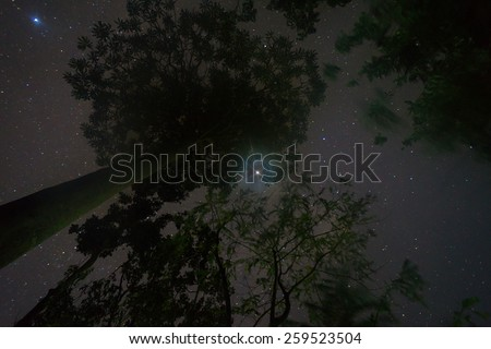 Starry night at Borneo jungle with tree silhouette and twinkle star.  - stock photo