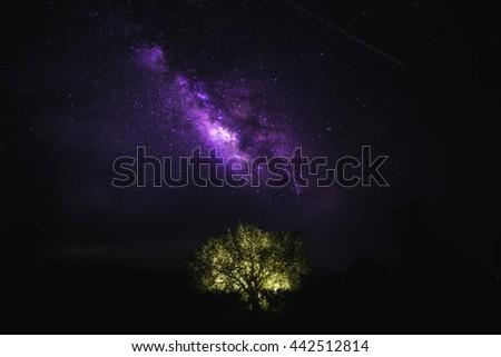 Stars, trees, see the Milky Way stars - stock photo