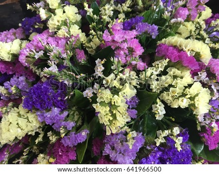 Statice Flower Stock Images Royalty Free Images Amp Vectors Shutterstock