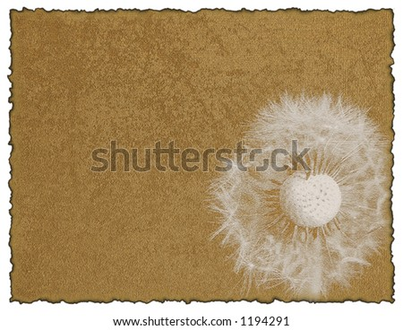 Stationery with dandelion flower on textured burnt torn decorative paper background