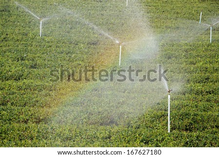 steam sprinkles in green tea plantation with rainbow - stock photo