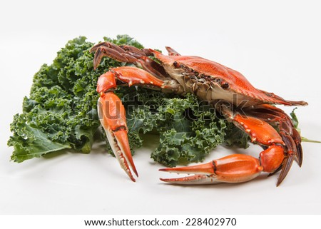 Steamed Blue Crab garnished with kale on white background - stock photo