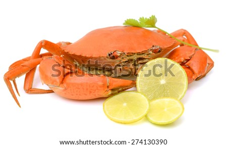 Steamed Crab on white background. - stock photo