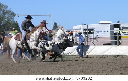 Steer Wrestling - stock photo