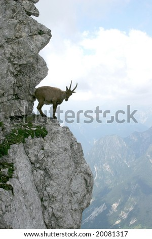 stein-bock - stock photo