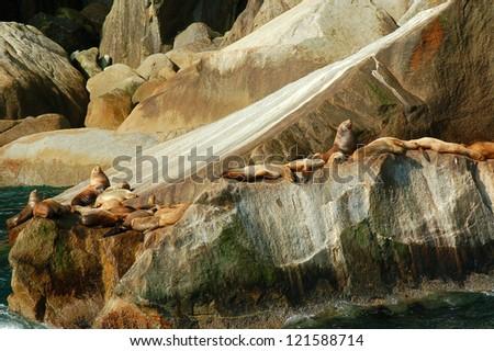 Stellar sea lions sunning on smooth stone. - stock photo