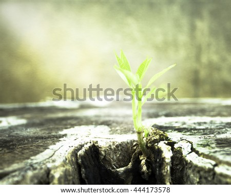 Stem Farm Chance Charity Afforest Volunteer Give Bud Land Dirt Old Color Wall Wet Row Up Black Idea Cling Moss Leaf Hope Bark Seed Rings Young Leaves Rough Sprout Plant Trunk Water Drop Spray Detail - stock photo