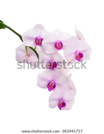 Stem of a white orchid isolated on white