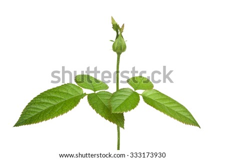 Stem of a young plant isolated on white background