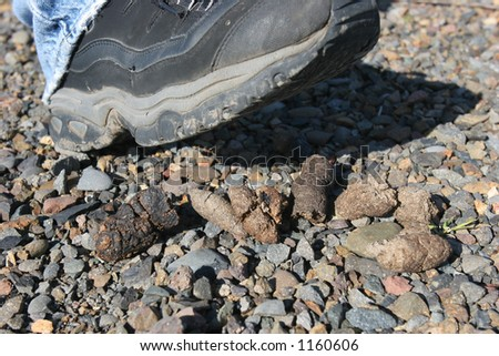 Stepping in Dog Poo