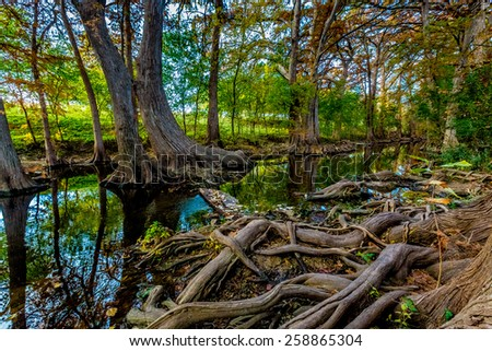 Stepping Stones, Large Cypress Roots, and Fall Foliage on Cibolo Creek, Texas. - stock photo