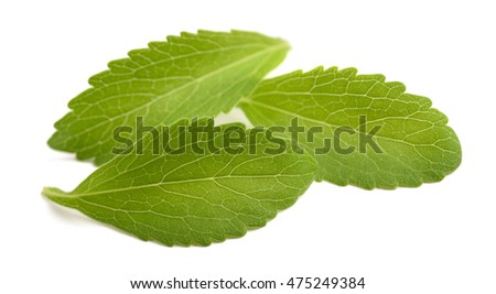 Stevia leaves isolated on white background