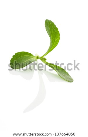 Stevia leaves isolated on white background. Culinary aromatic herbs. - stock photo