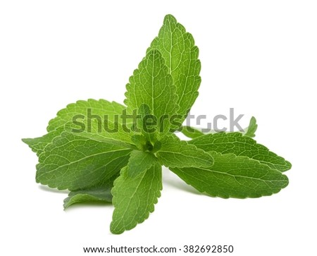 Stevia rebaudiana bunch  isolated on white background