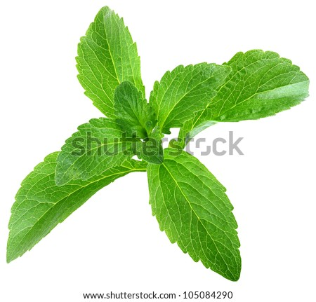 Stevia Rebaudiana Leafs Isolated on White Background - stock photo